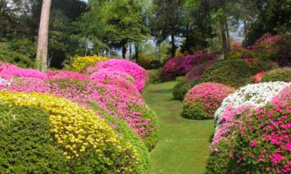 Note di Daniele | I Giardini di Marzo