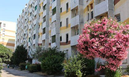 Bando case popolari, 20 disponibili a Cesano. Attivo il servizio di assistenza per le domande