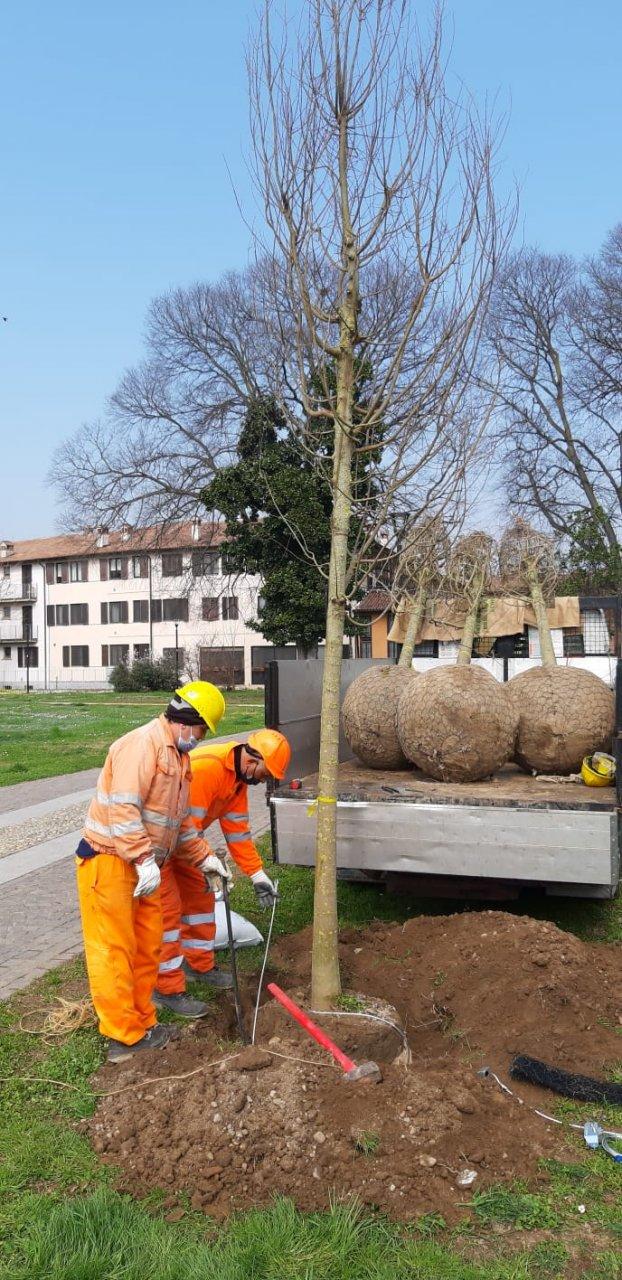 Cesano nuovi alberi