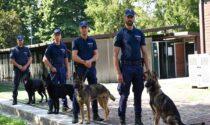 Controlli antidroga con le unità cinofile: al via l'accordo per Buccinasco
