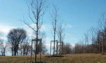 Forestami, a Gaggiano piantati 4.115 nuovi alberi e arbusti