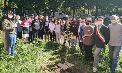 """Federico pianta un albero nel giardino della scuola: """"Simbolo per i compagni che verranno"""""""
