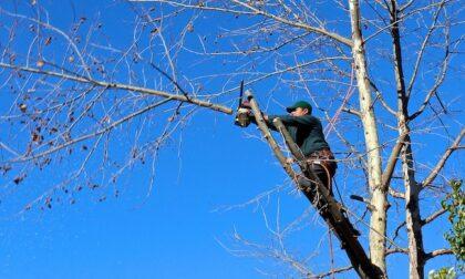 Tagliano degli alberi e distruggono i nidi, scatta la multa