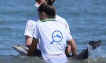 Cucciolo di delfino muore dopo aver perso il suo branco ed essersi spiaggiato