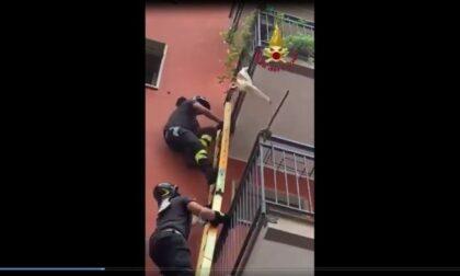 Cagnolino in pericolo, rischia di cadere dal terzo piano: lo salvano i vigili del fuoco