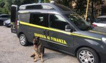 Due arresti per traffico di droga, fondamentale il lavoro della polizia locale di Cesano