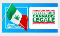 Referendum cannabis: Justmary partner di MeglioLegale nella raccolta firme.