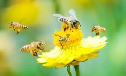 Nasce il Laboratorio delle api: arnie al Parco della Poesia di Buccinasco