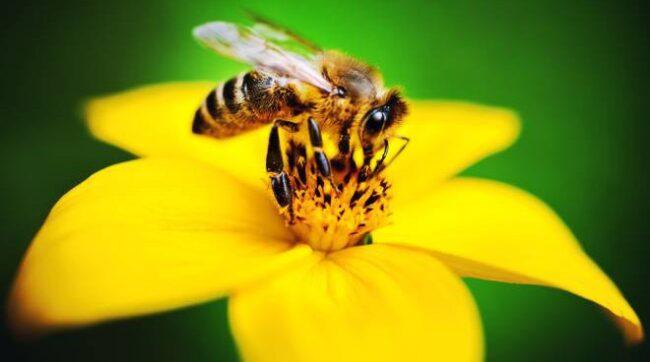Laboratorio api Buccinasco